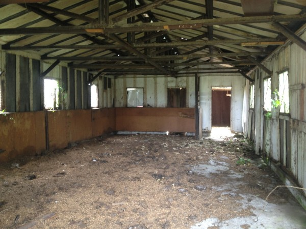 LandBanking-Takanini-Ardmore. Derelict and decayed. Inside the stables, all that's left now is straw and dung.