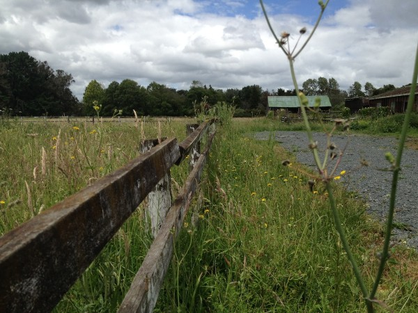 LandBanking-Takanini-Ardmore. Derelict and decayed. There's nothing much left of Takanini's racehorse industry now.