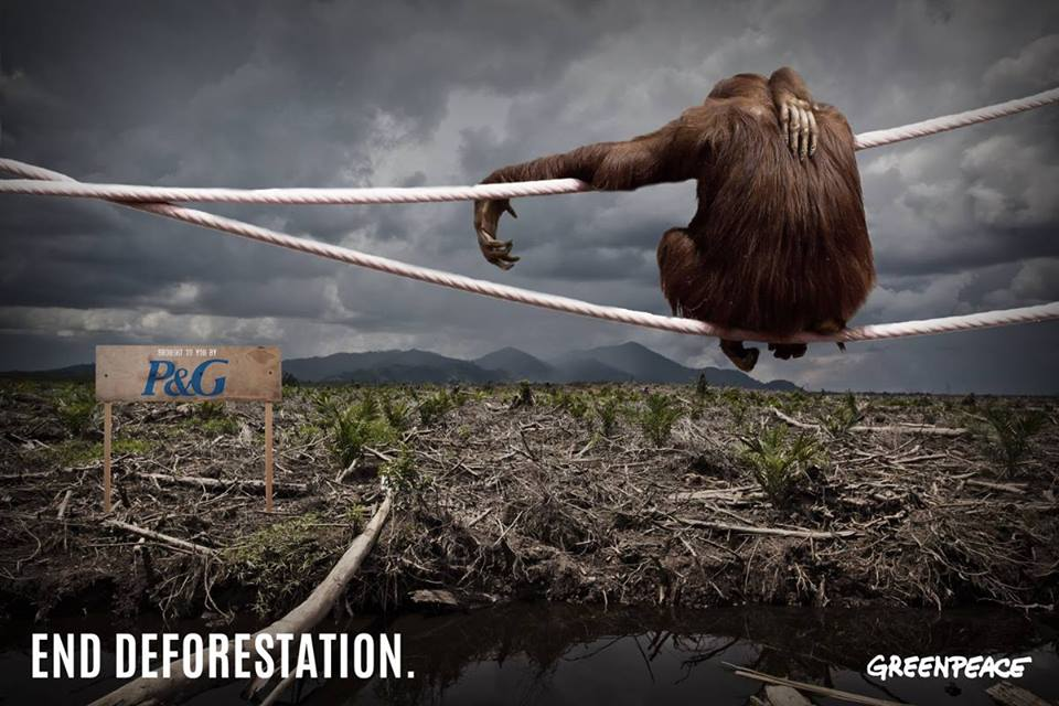 Greenpeace Deforestation 171 The Daily Blog