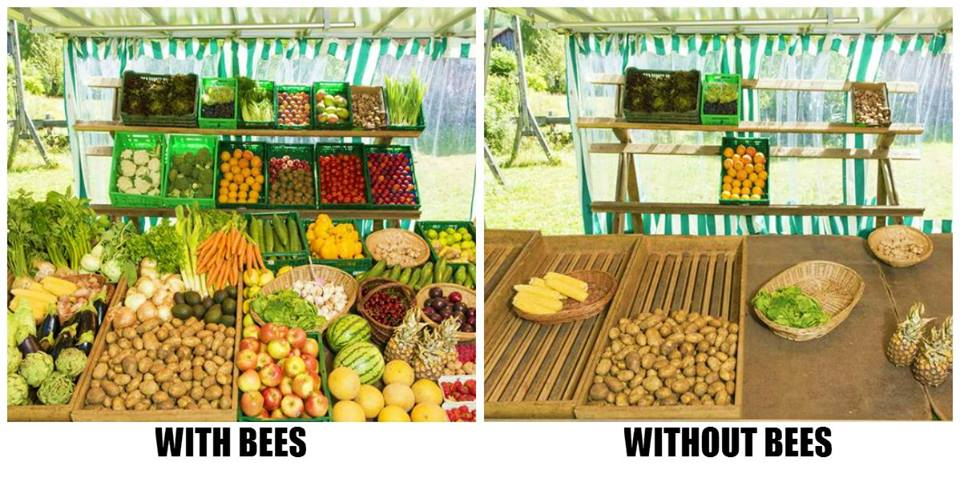 Well It Is Just A Picture But The Fact Without Bees World Would Be Totally Different Place Apart From Giving Us An Opportunity To Consume