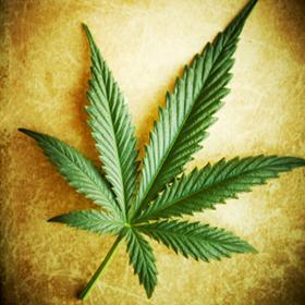 Cannabis-1.jpg