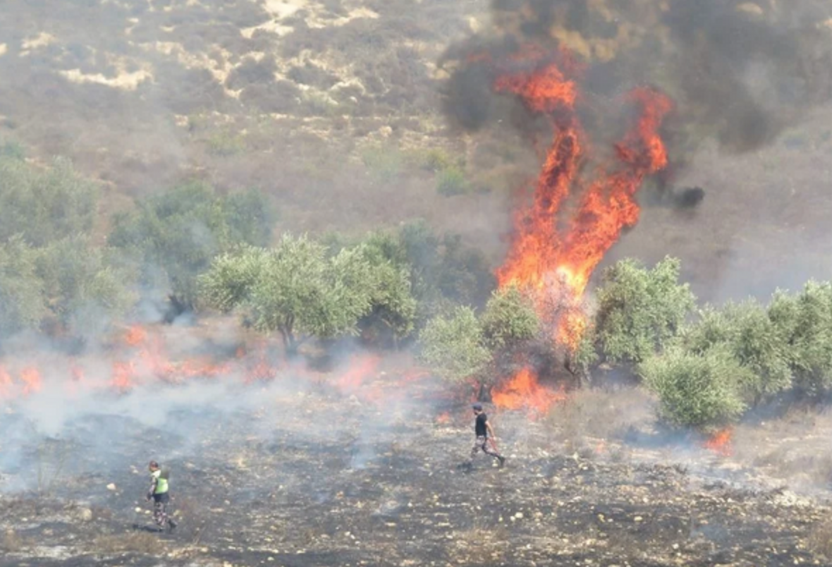 Arson and plunder ruin Palestinian olive harvest | The Daily Blog